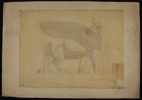Layard's pencil sketch of the Winged Bull/ Lion from Nimrud (LAY/1/5).